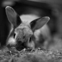 Кроличье лакомство :: Анатолий Шулков