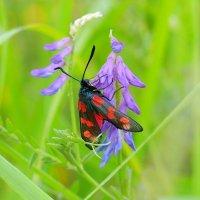и снова бабочки  3 :: Александр Прокудин