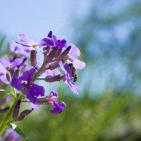 Конкурс «Фото цветов на фоне неба» Пост №2 :: Наталья (ShadeNataly) Мельник