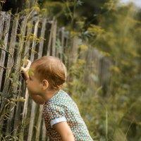 у соседа малина слаще :: Евгения кондаурова