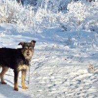 Среди снежных кружаев :: Светлана Рябова-Шатунова