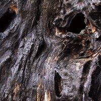 Лесов сгоревших вечные глаза... :: Лесо-Вед (Баранов)