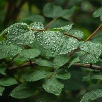 После дождя :: Наталья Захарова