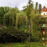 Летом в парке. :: barsuk lesnoi