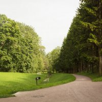 Летняя дорога в парке :: Aнна Зарубина