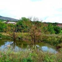 Старый пруд :: Артур Хороший