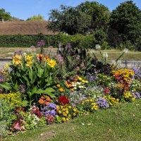 массив цветов, просто так в деревни :: Георгий