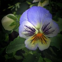 Цветок :: Александр Сапунов