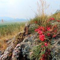 Украшение горных районов :: Владимир Звягин