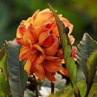 Щедрый на цветы июль уходит, до августа один день, а жаль... :: Татьяна Помогалова