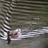 Следы на воде :: Юрий Кевин