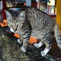 Кошачья тема :: Виктор Куприянов