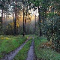 Грибной росою в лес зовёт дорога... :: Лесо-Вед (Баранов)