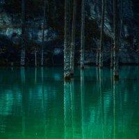 мертвый лес :: Ирина Масальская