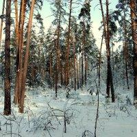 вспоминая зиму 5 :: Александр Прокудин