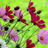 Ботаника :: OLLES