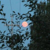 Луна :: Наталья Ястребова