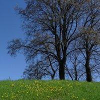Весна :: kudrni Кудрявцева