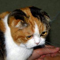 Грустный котик :: Vlad Сергиевич