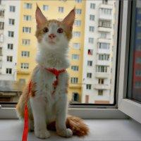 Папа, смотри, смотри! Там ещё кто-то на подоконнике в оранжевом!!! :: Кай-8 (Ярослав) Забелин