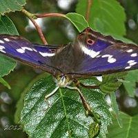 Бабочки и насекомые. :: Liudmila LLF