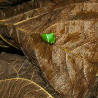 насекомое IMG_0438 :: Олег Петрушин