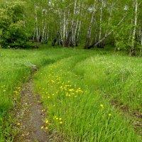Дорога в лес :: Светлана Рябова-Шатунова