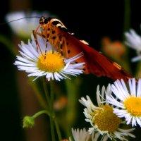солнечный нектар :: Alisa Koteva