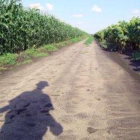 """""""Селфі власної тіні по дорозі між кукурудзяним і соняшниковими полями"""" :: Ростислав Кухарук"""