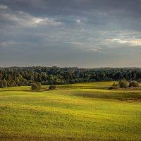 фотопутешествие по природному заказнику Вепсский лес. :: Елена Маковоз