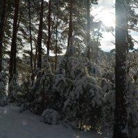 зимой в лесу :: Татьяна Лаптева
