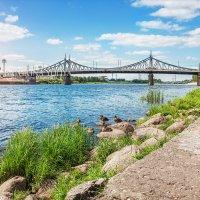 Староволжский мост и утки :: Юлия Батурина