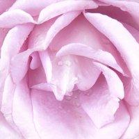 цветок :: Ариэль Volodkova