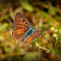 про бабочек на цветах 1 :: Александр Прокудин