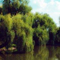 Ивы у Большого пруда в Городском саду Краснодара :: Krasnodar Pictures