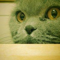 Кошка :: Сергей Воронков