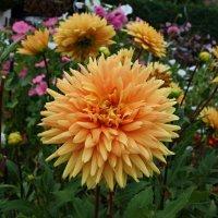 Цветы августа... :: Galina Dzubina