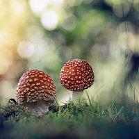 ....спорный вопрос, о размножение грибов..) :: Лилия .