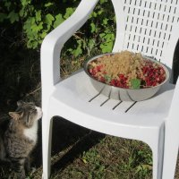 Время сбора смородинки...) :: Mariya laimite