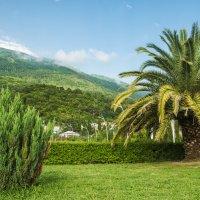 Горы...... пальмы..... :: Артем Тимофеев