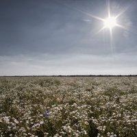 Бескрайность лета. :: Андрий Майковский
