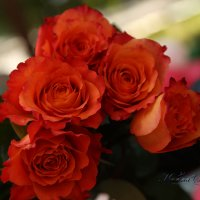 Королева цветов :: Марина Щуцких