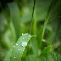 После дождя :: Anna Koldings