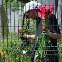 Маэстро цветов :: Катерина Клаура