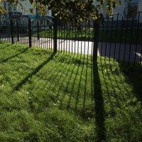 Тени на траве :: Николай Филоненко