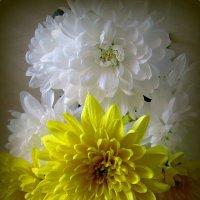 Желтые и белые :: Сергей Карачин