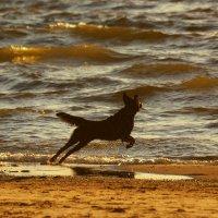 летящей походкой :: linnud