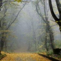 В парке туманном.......... :: Юрий Цыплятников
