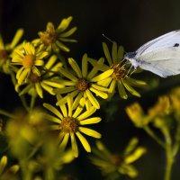цветы :: Геннадий Свистов