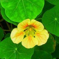 Яркий лучик среди зелёных листьев :: Daria Vorons